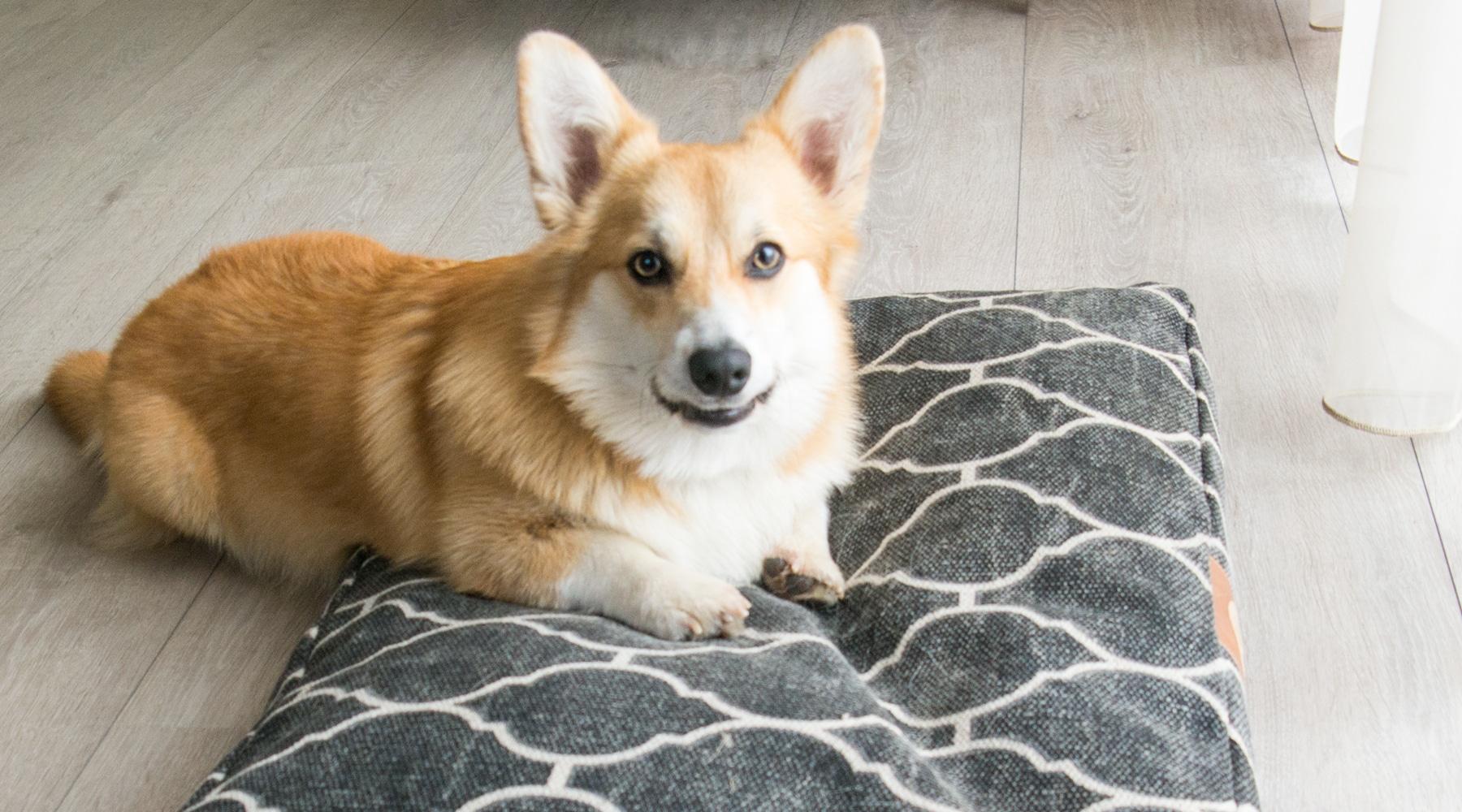 kutya lakásban
