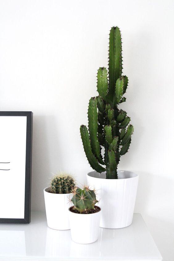 dekorálj növényekkel